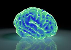 脳科学と心理学の違い